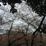 開花予想が発表され、お花見の季節がやってきます!(^o^)