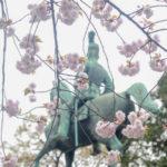 『うえの桜まつり』が終わり、今咲いている桜を探しましょう♫