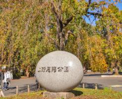上野公園紅葉1